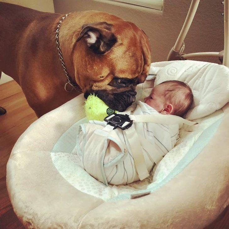 amizades entre animais