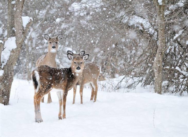 animais no inverno