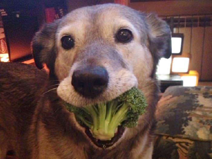 animais fofos comendo