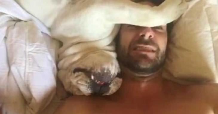 Cães sem noção