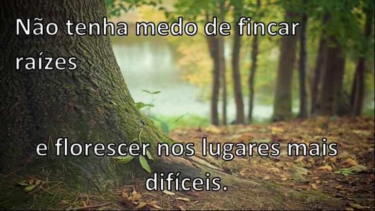 felicidade segundo as árvores
