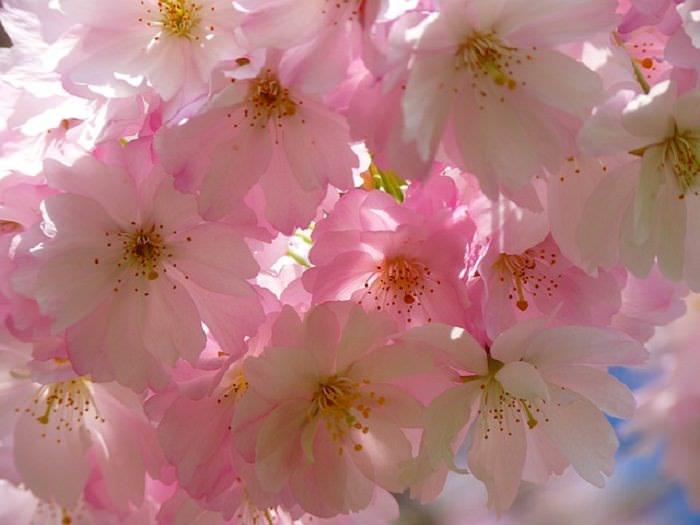 significado das flores