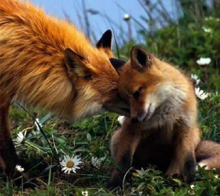 animais adoráveis