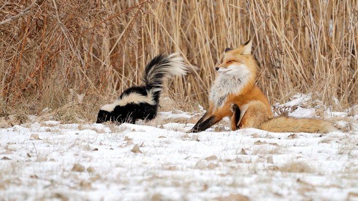 animais adoráveis na neve