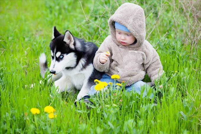 bebê e filhote de husky