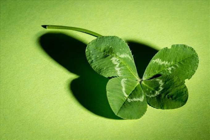 trevo de 4 folhas