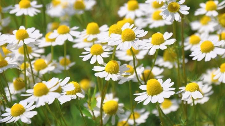 9 ervas e especiarias que fazem bem ao cérebro