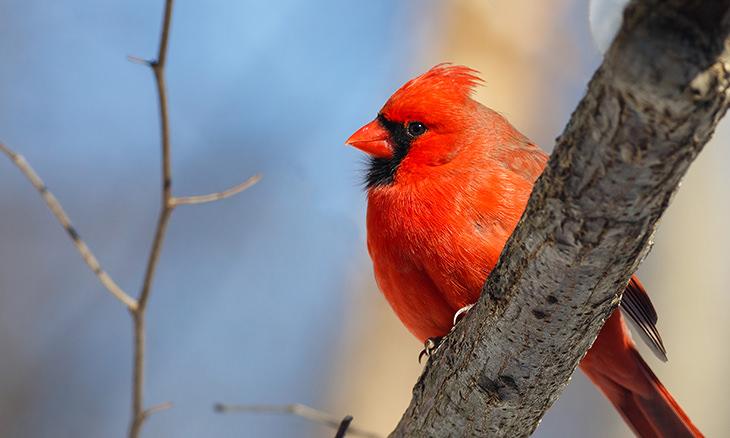 cores vermelhas na natureza