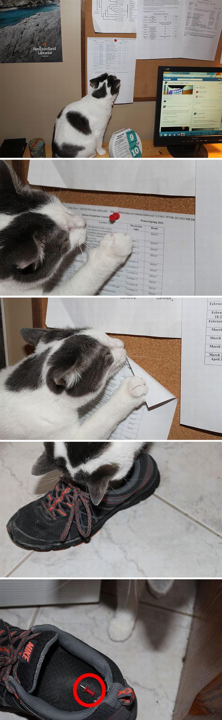 gatos maldosos