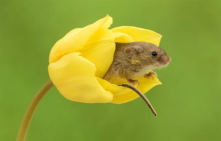 ratos fofos