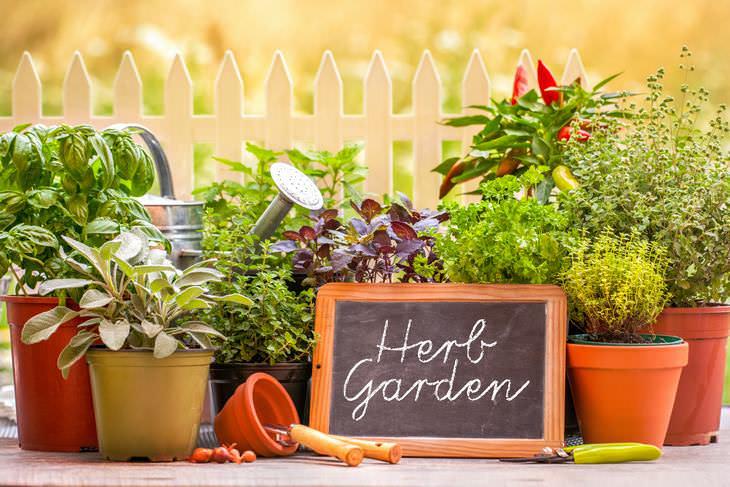 6 Dicas para cultivar ervas frescas em casa o ano todo