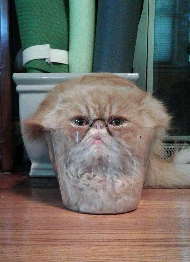 fotos hilárias de gatos líquidos