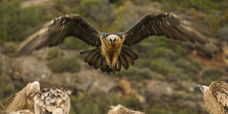 As 10 aves que voam mais alto