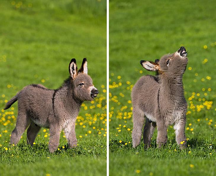 filhotes de burro