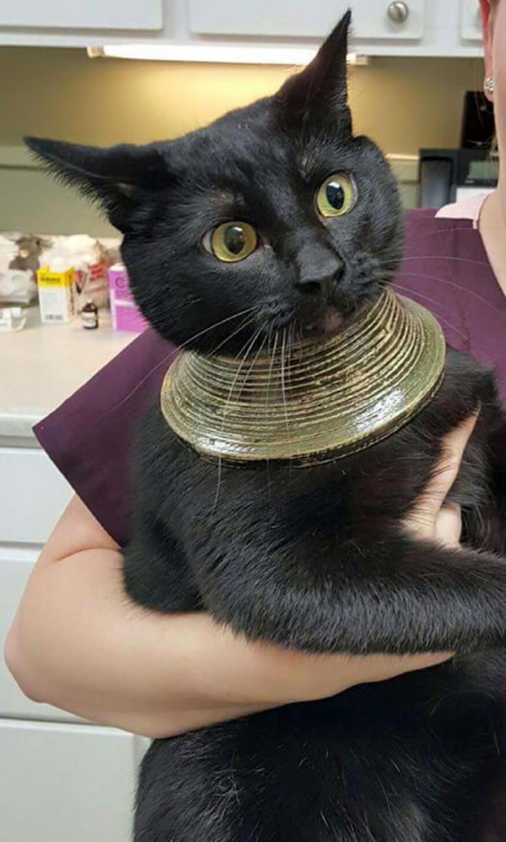 gatos engraçados