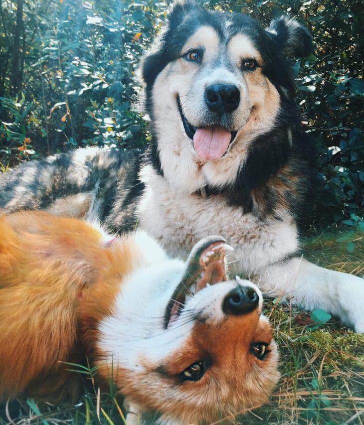 animais sorrindo