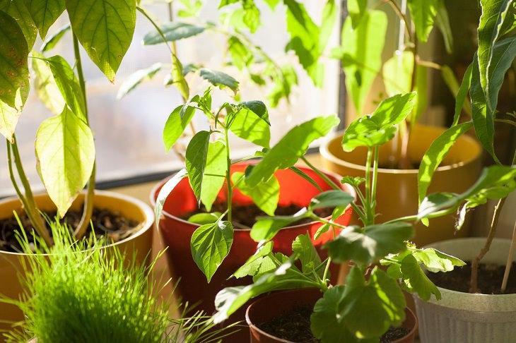 umidade das plantas