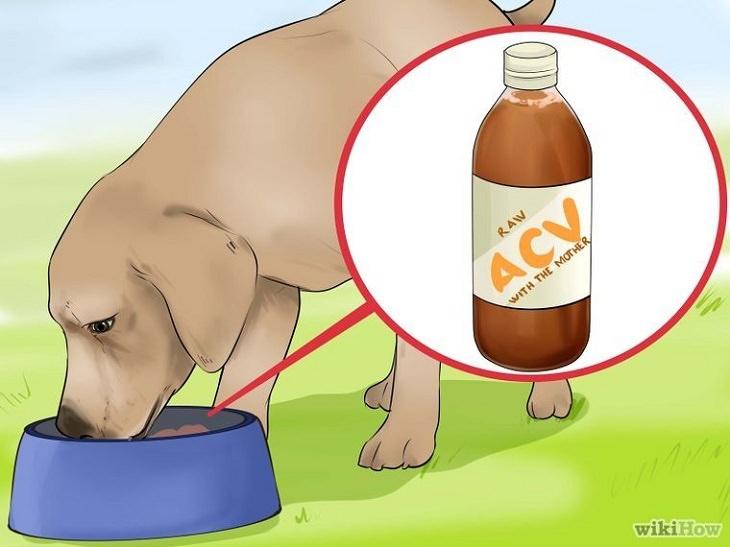 vinagre de maçã para cachorro