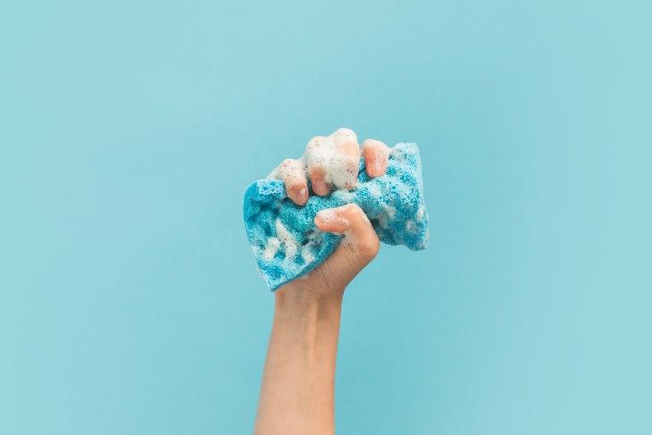 germes da esponja