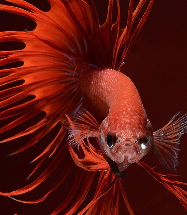 fotos de peixes