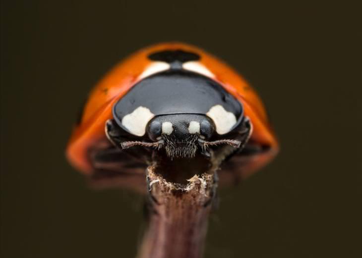 foto de insetos