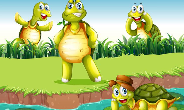Quatro tartarugas