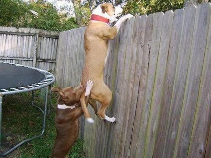 animais trabalhando em equipe