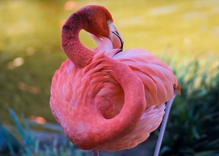 fotos flamingos