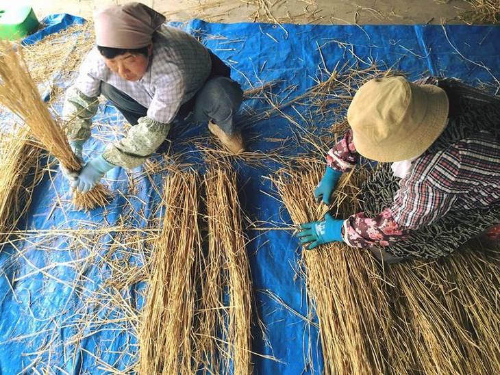 arrozais do Japão