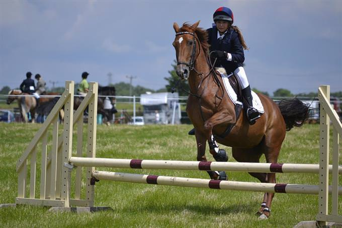 Cavalo pulando obstáculo