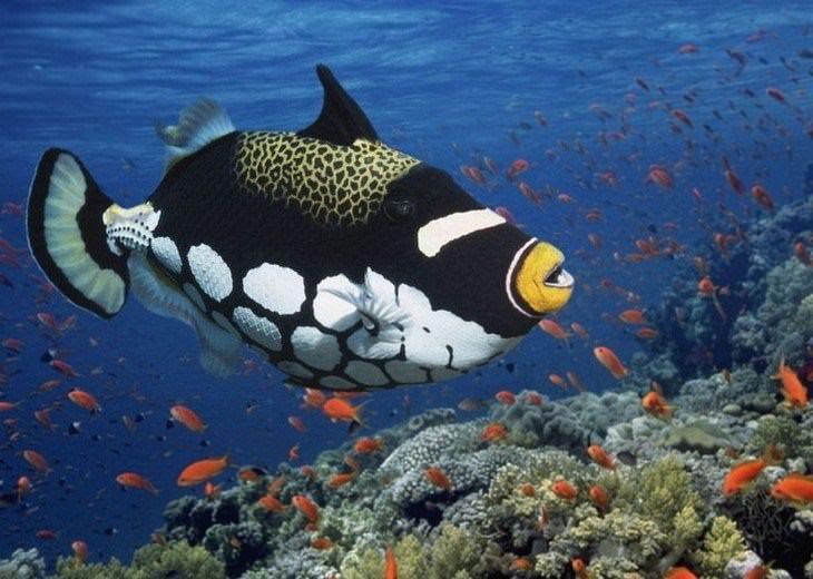 peixes mais bonitos do mundo