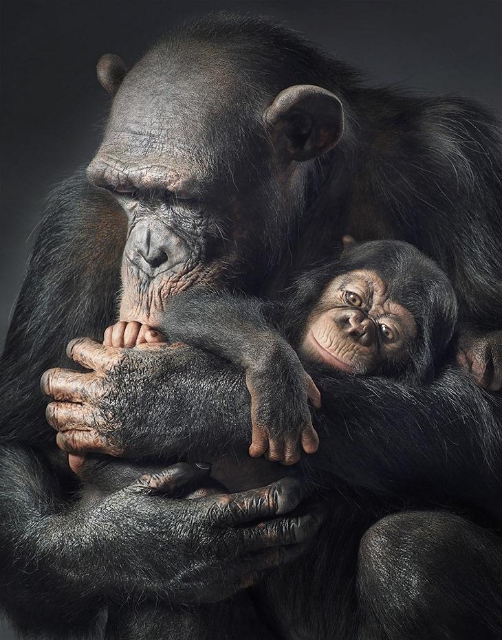 animais em risco de extinção