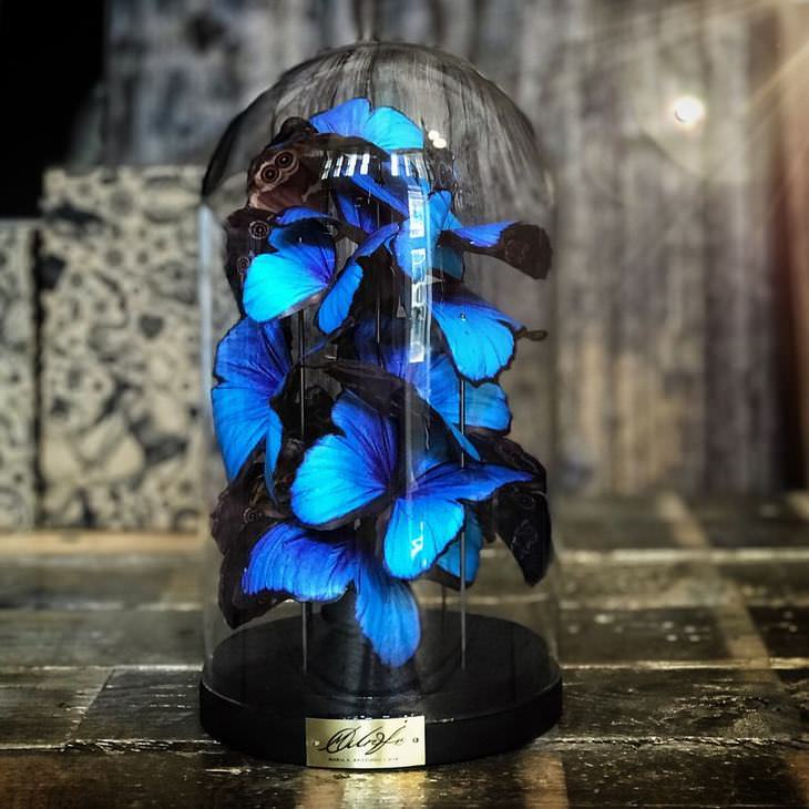 arte de borboletas