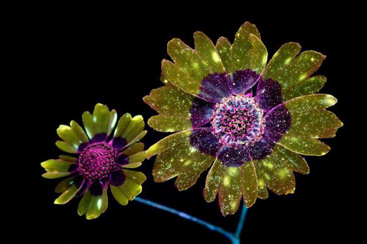 Luzes das flores
