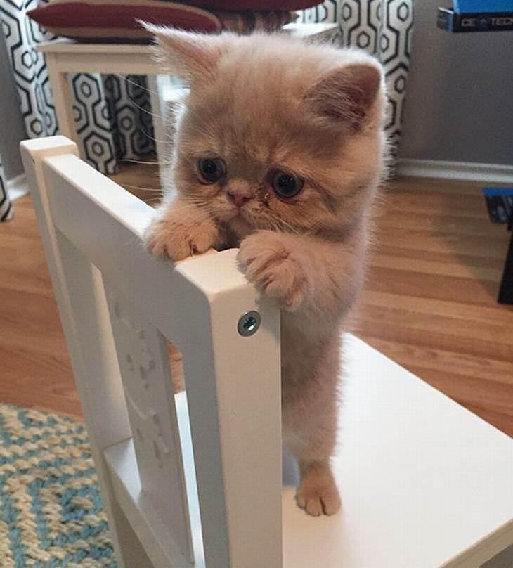 Seu dia melhora com gatinhos fofos