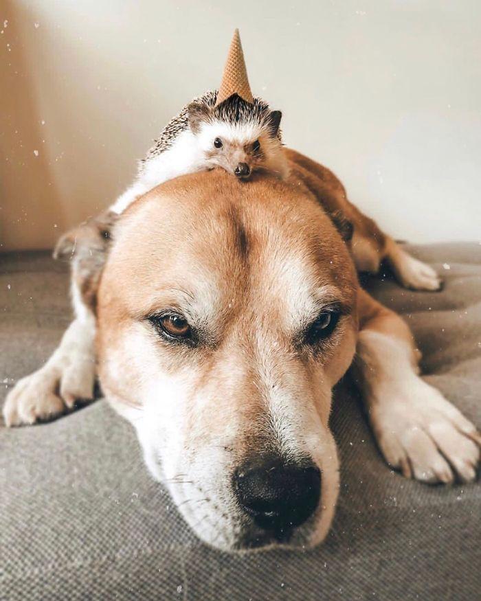 Pockee e Herbee São Ouriços Fofos