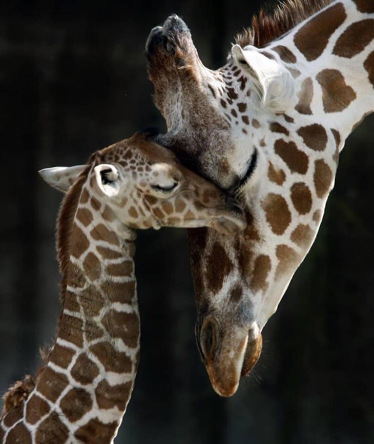 Mamães e filhotes