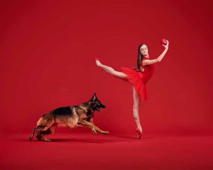 Bailarinos e Caninos