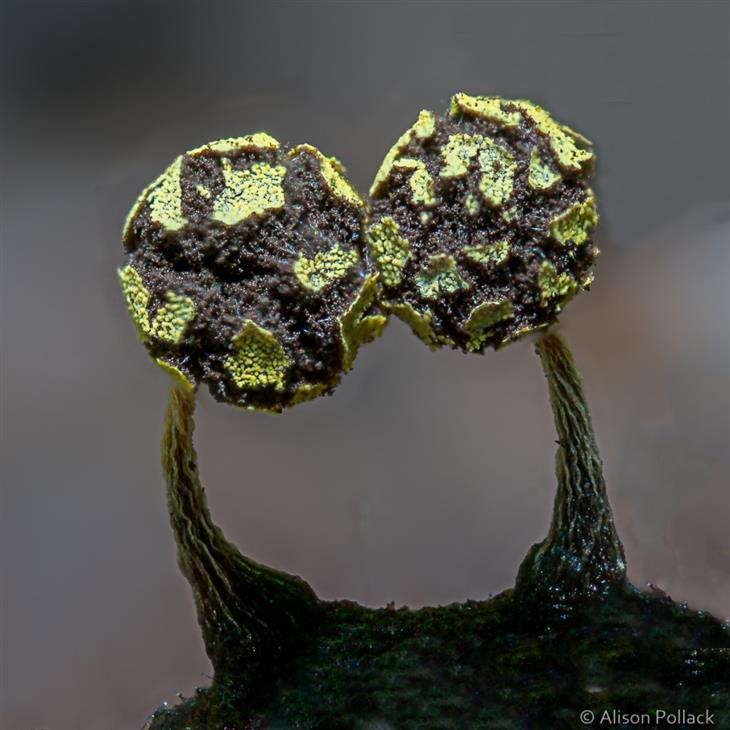 Mundo dos cogumelos