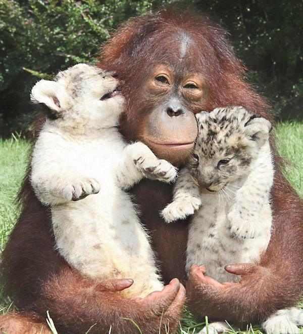 Amizades improváveis bichos