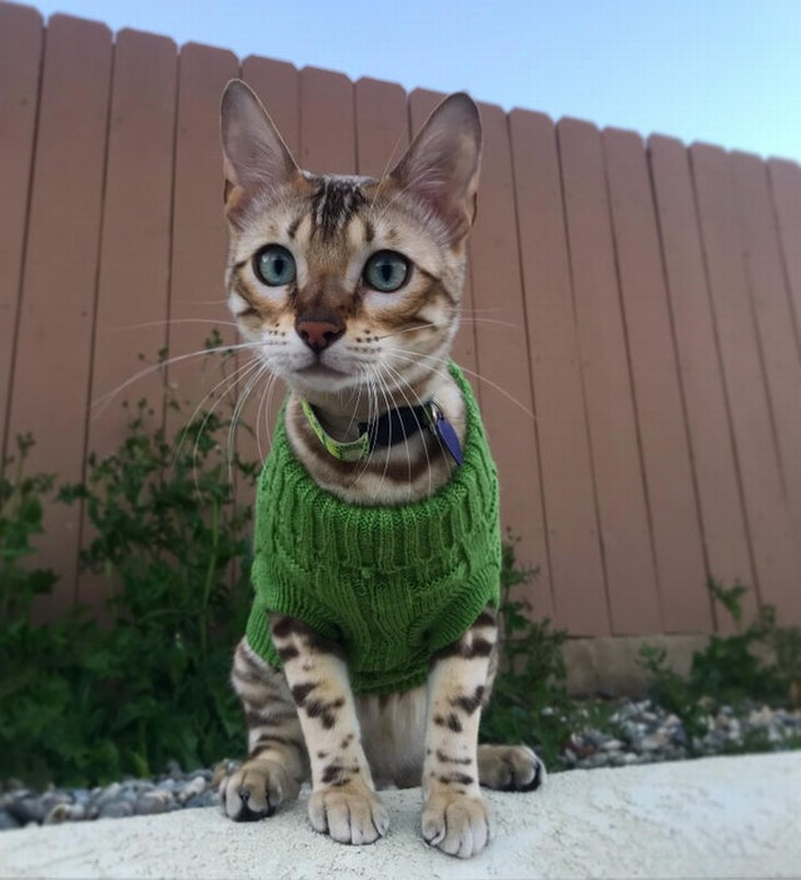 Bichos de suéter