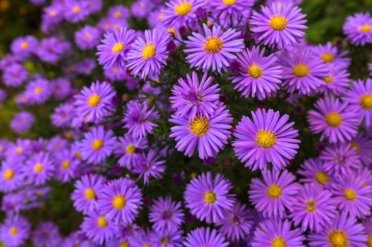 Linguagem das flores