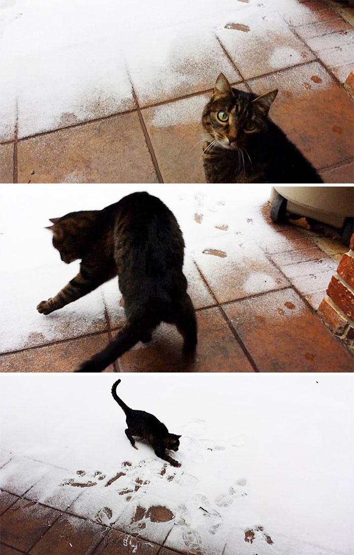 Animais e a primeira neve