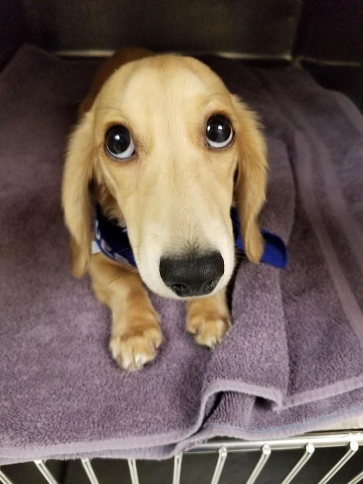 Cachorrinhos fofíssimos filhote com olhos tristes