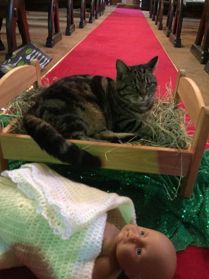 Animais no Natal gato na manjedoura