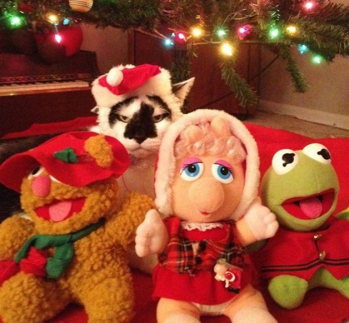 Animais no Natal gato enfeitado