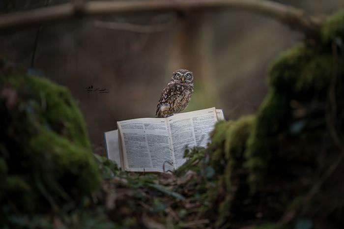 Poldi, a corujinha com um livro