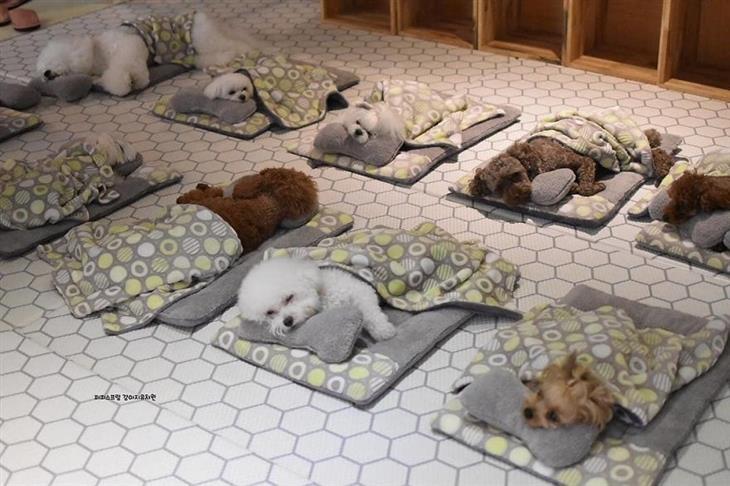 Filhotinhos dormindo na creche