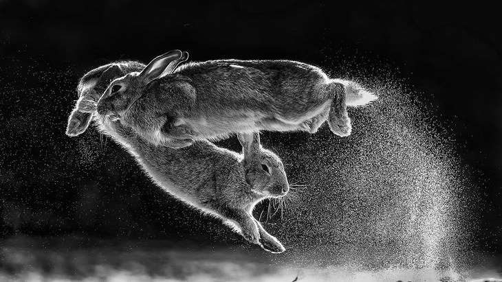 2019 Nature Photographer Of The Year winners and notable mentions Csaba Daroczi Jump