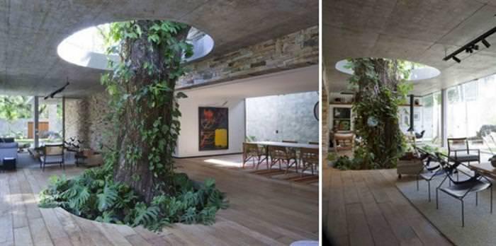 Surreal interiors casa com árvore